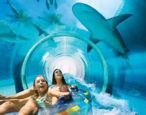 акулы5
